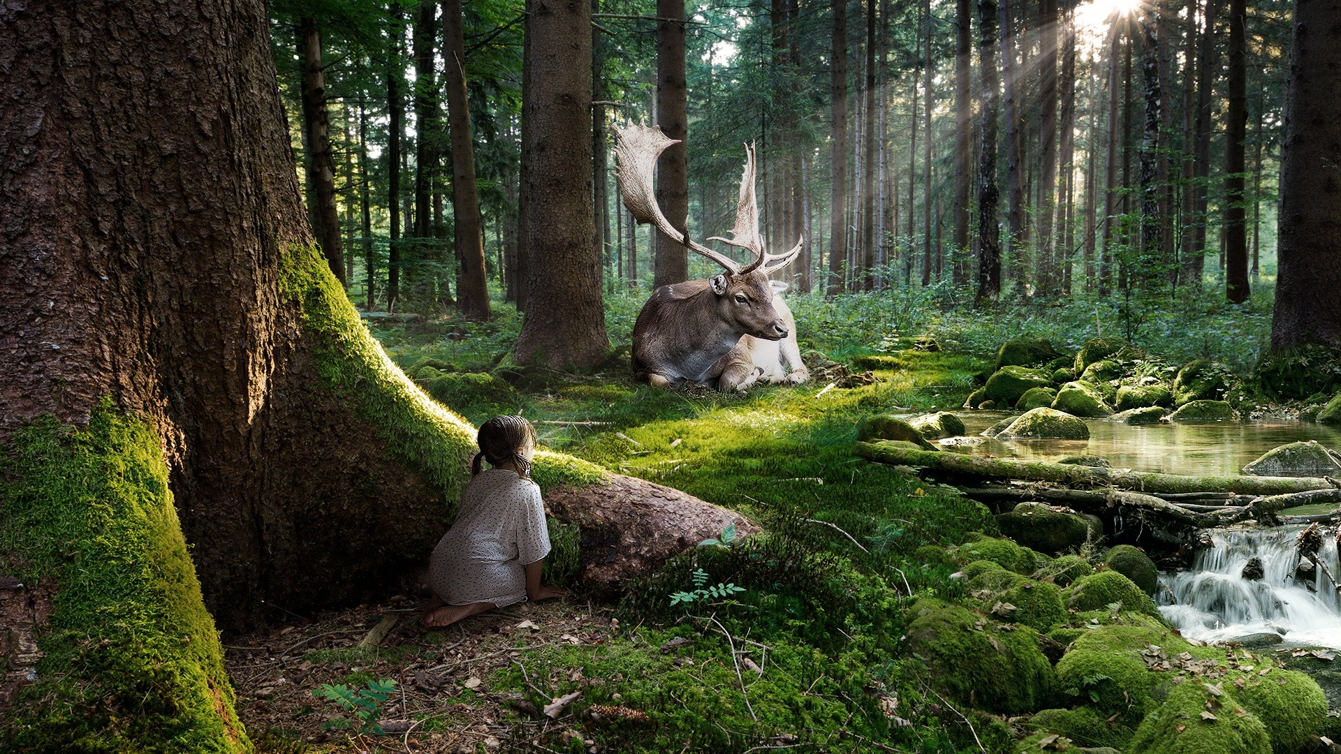 Deer Wallpapers | Best Wallpapers