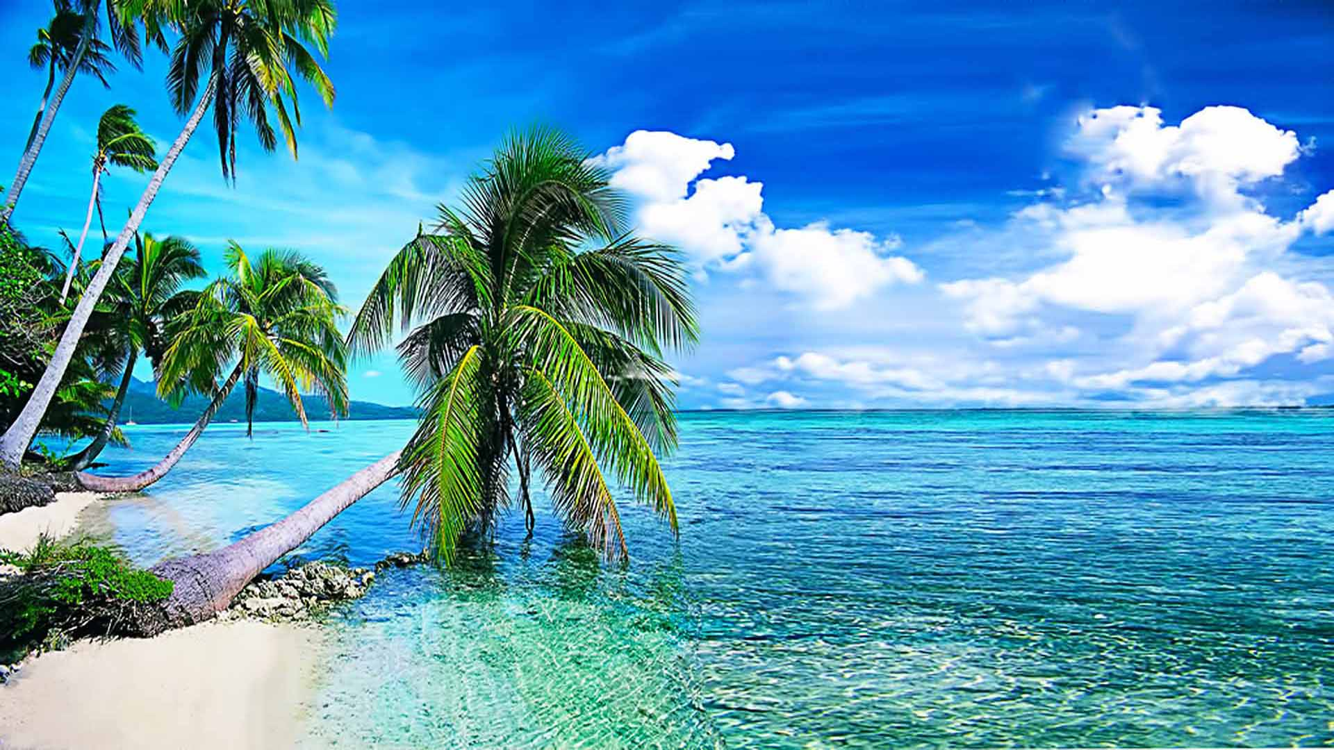 Summer Background, Tropical Beach With Palmi.okean With Crystal Clear ...