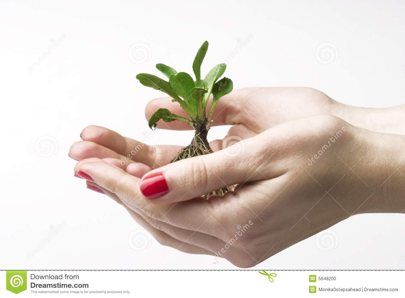 New life in hands- white background.