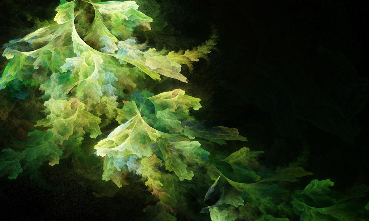 Abstract lettuce wallpapers and images - wallpapers, pictures, photos