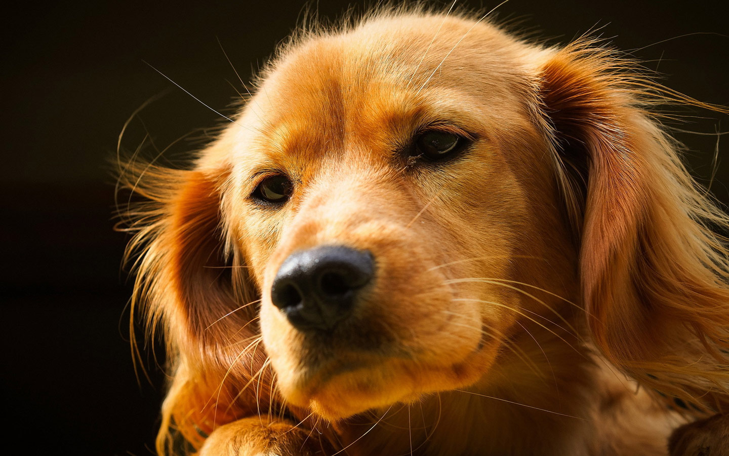 Very Cute Dog Free Desktop Wallpapers Wallpaper Pictures to pin on ...