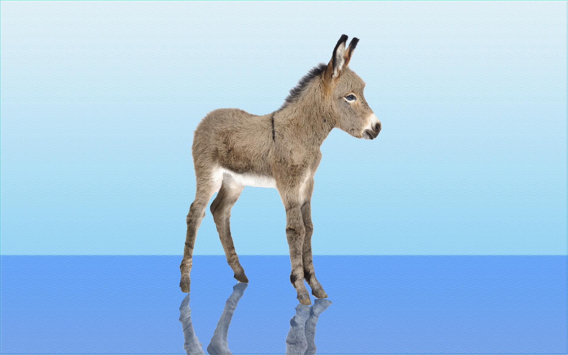 14 Donkey HD Wallpapers | Backgrounds - Wallpaper Abyss