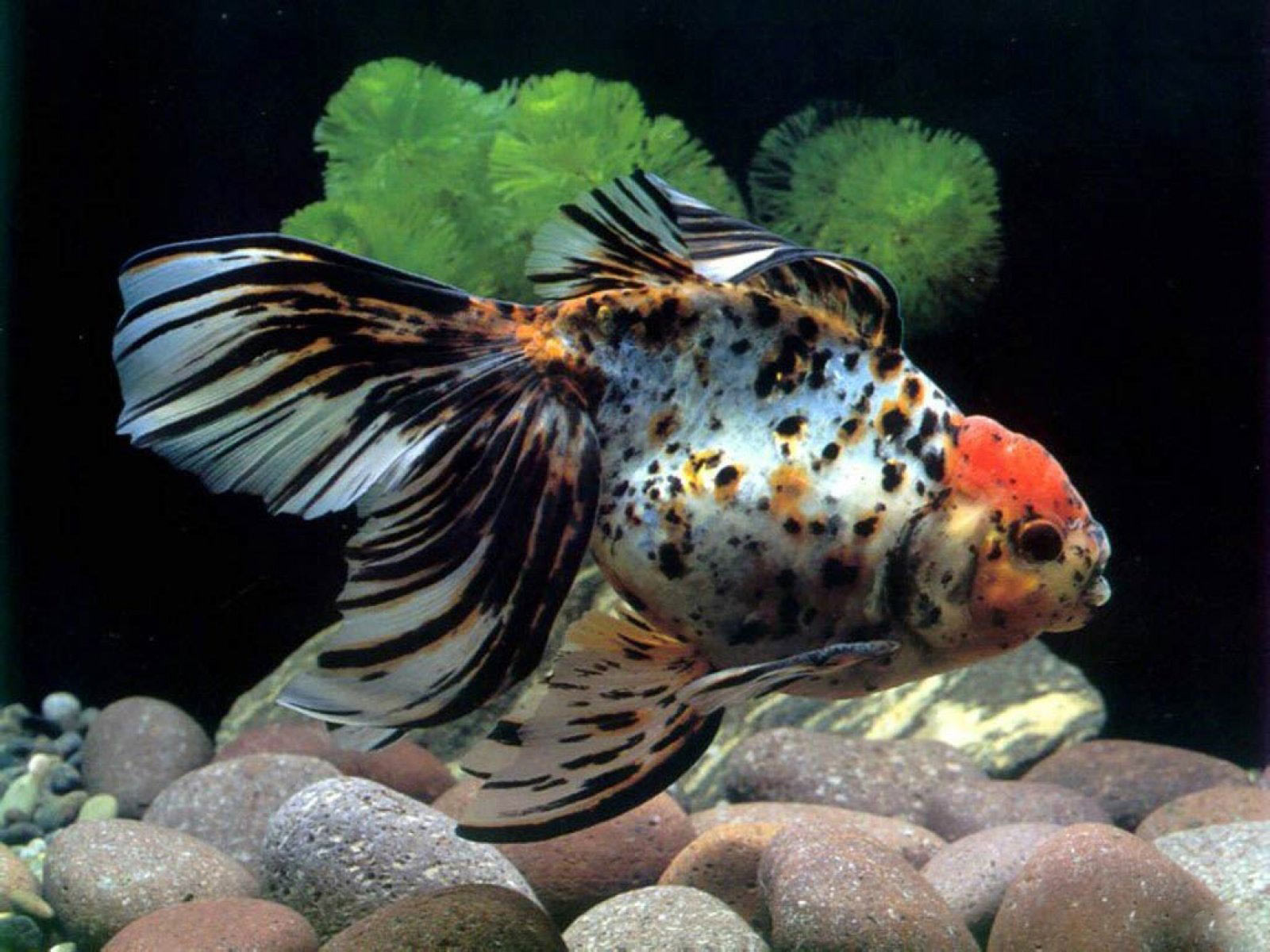 Fish Aquarium Backgrounds Computer Images & Pictures - Becuo