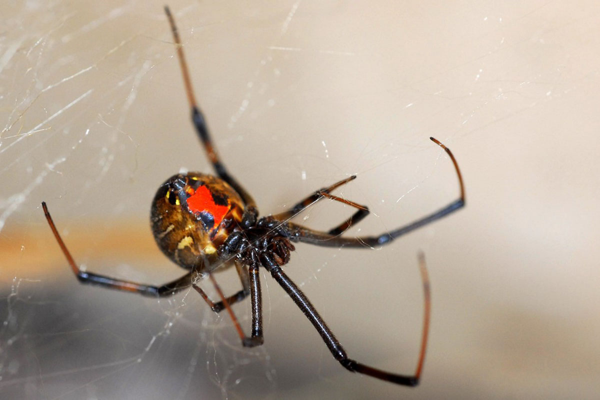 Scary Spider Moving HD Wallpapers – Daily Backgrounds in HD HTML ...