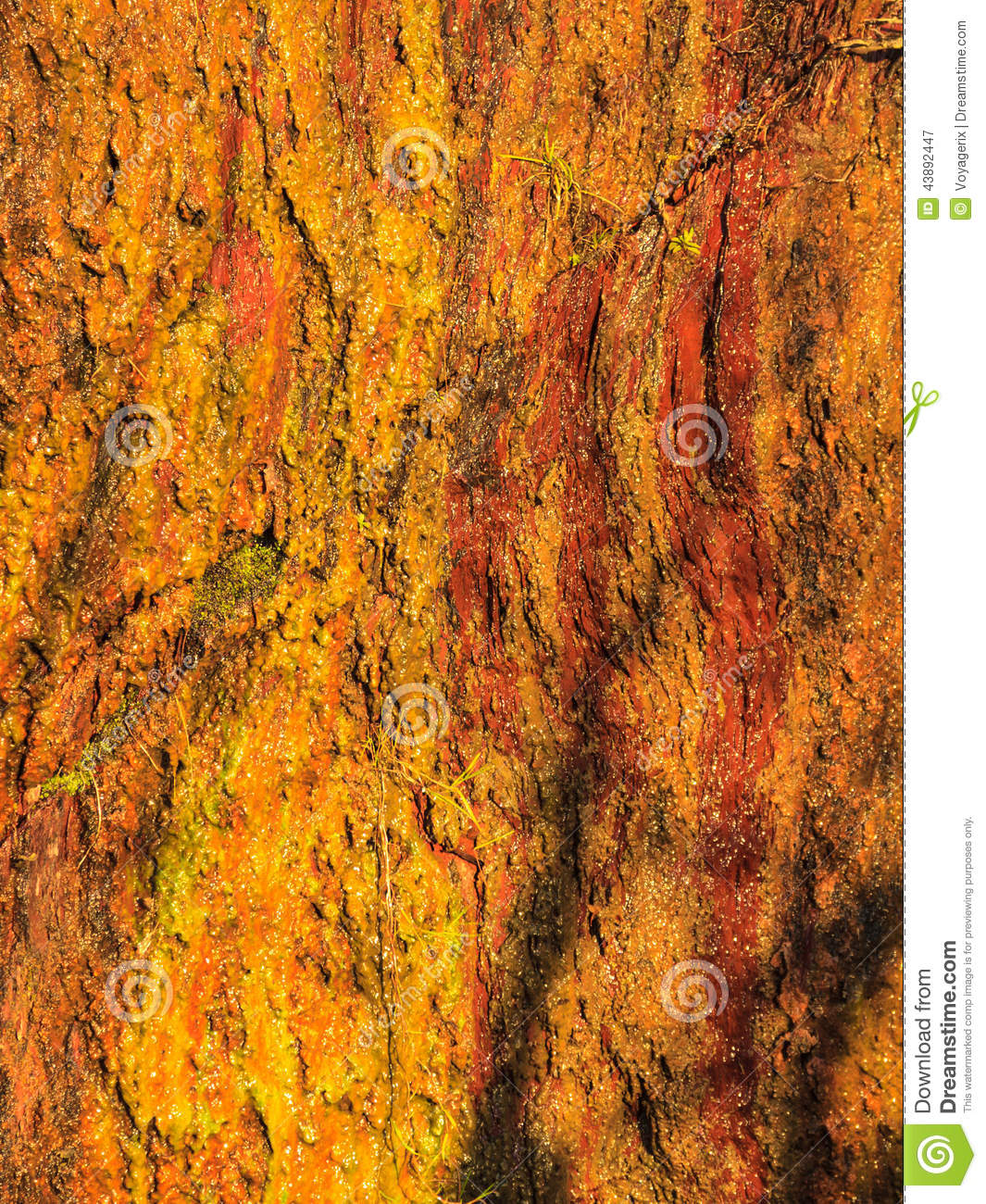 Golden Nugget Surface Texture Close Up Stock Photo | CartoonDealer.com ...