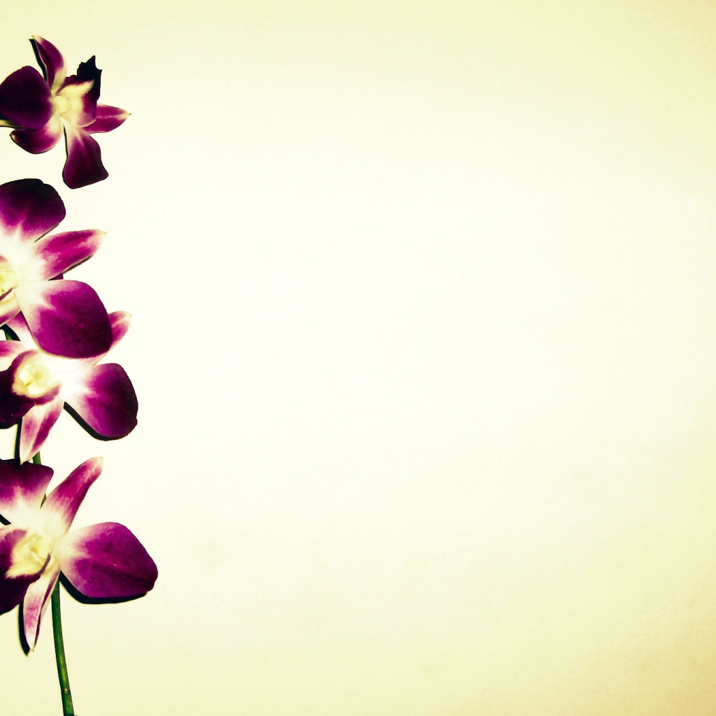 orchid-background-9-711862.jpg