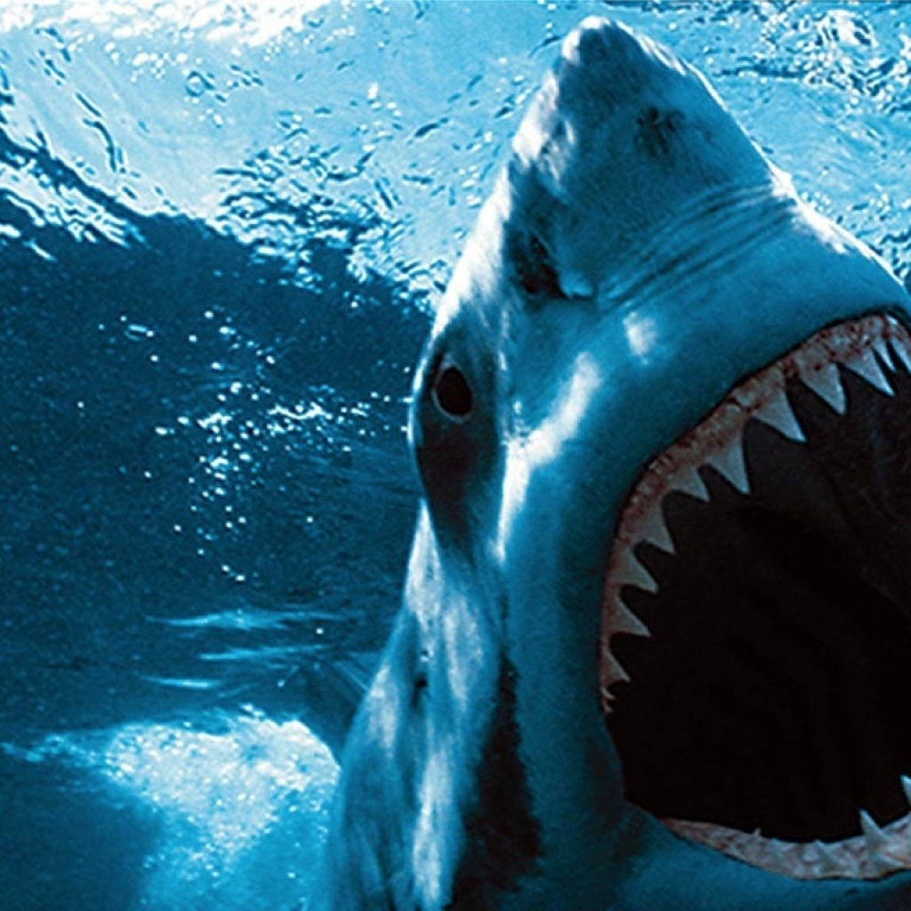 Jaws Backgrounds, 10/06/2016 0.55 Mb