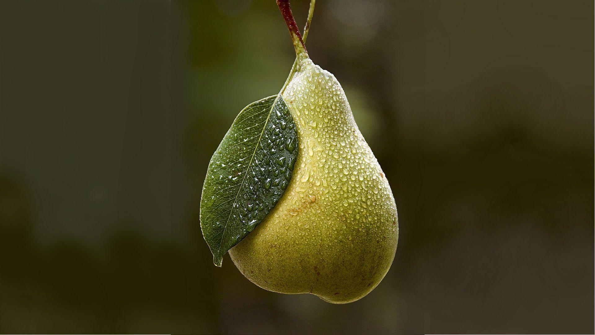 Download wallpaper background, pear, dew free desktop wallpaper in ...