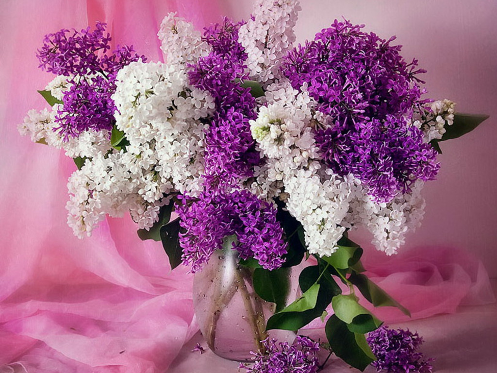 Wallpaper for Desktop Lilacs - WallpaperSafari