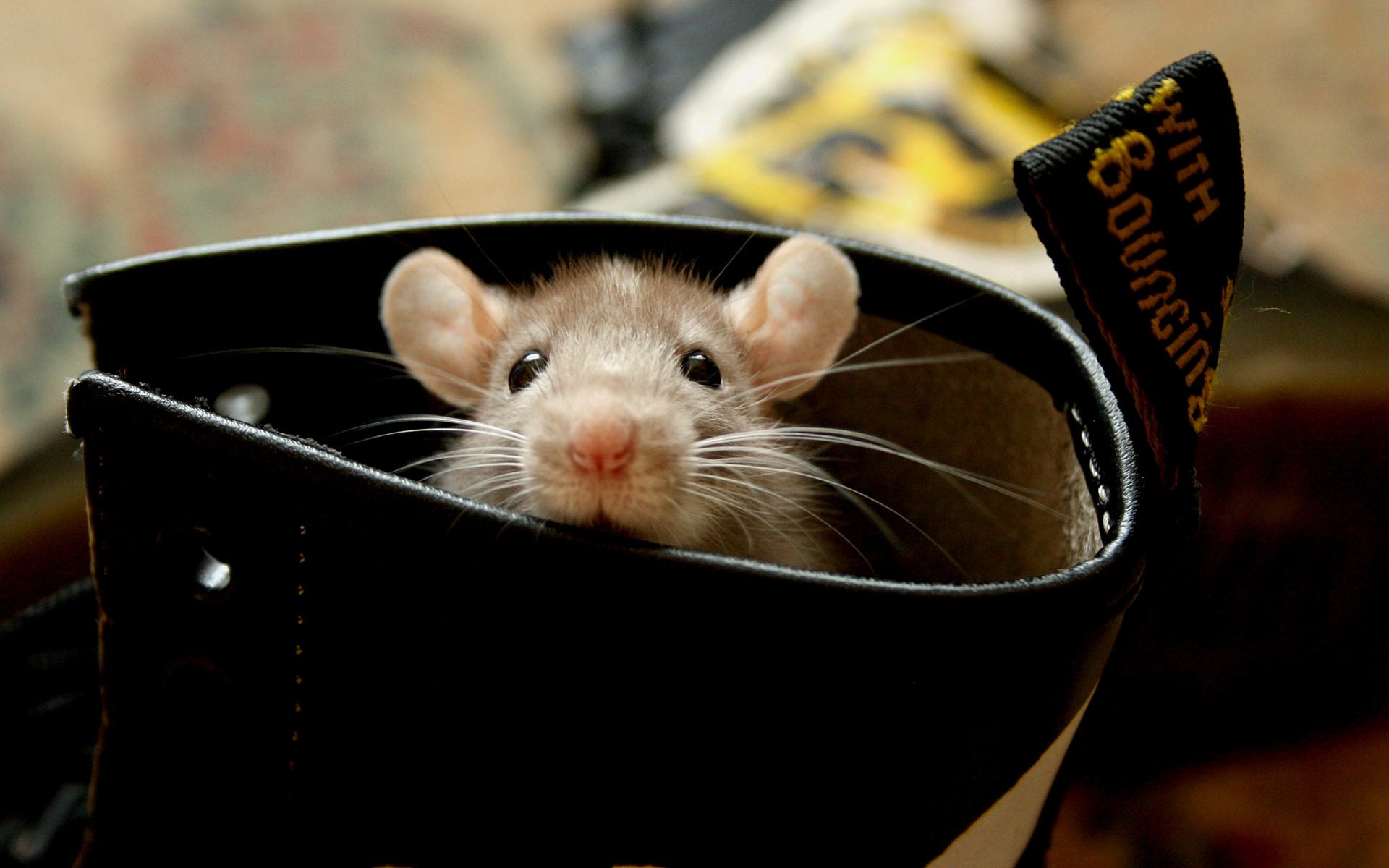 Beautiful Cute Mouse in Shoes Wallpaper Free Download | HD Wallpapers