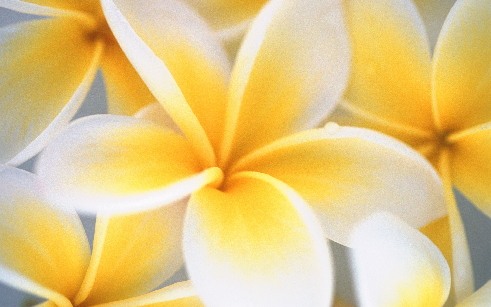 ... to download yellow wallpapers and make happiness a part of your life