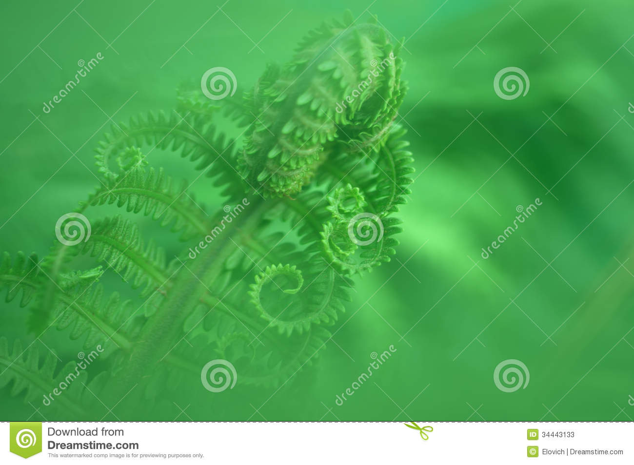 Young fern leaf. nature background.