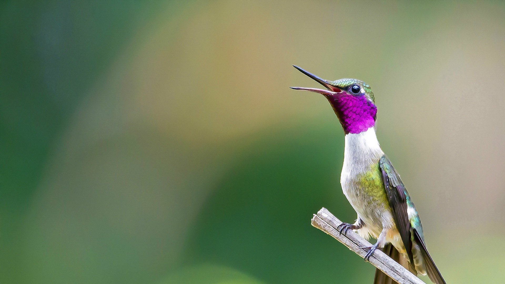 Purple neck and long beach small bird wallpaper | HD Wallpapers Rocks