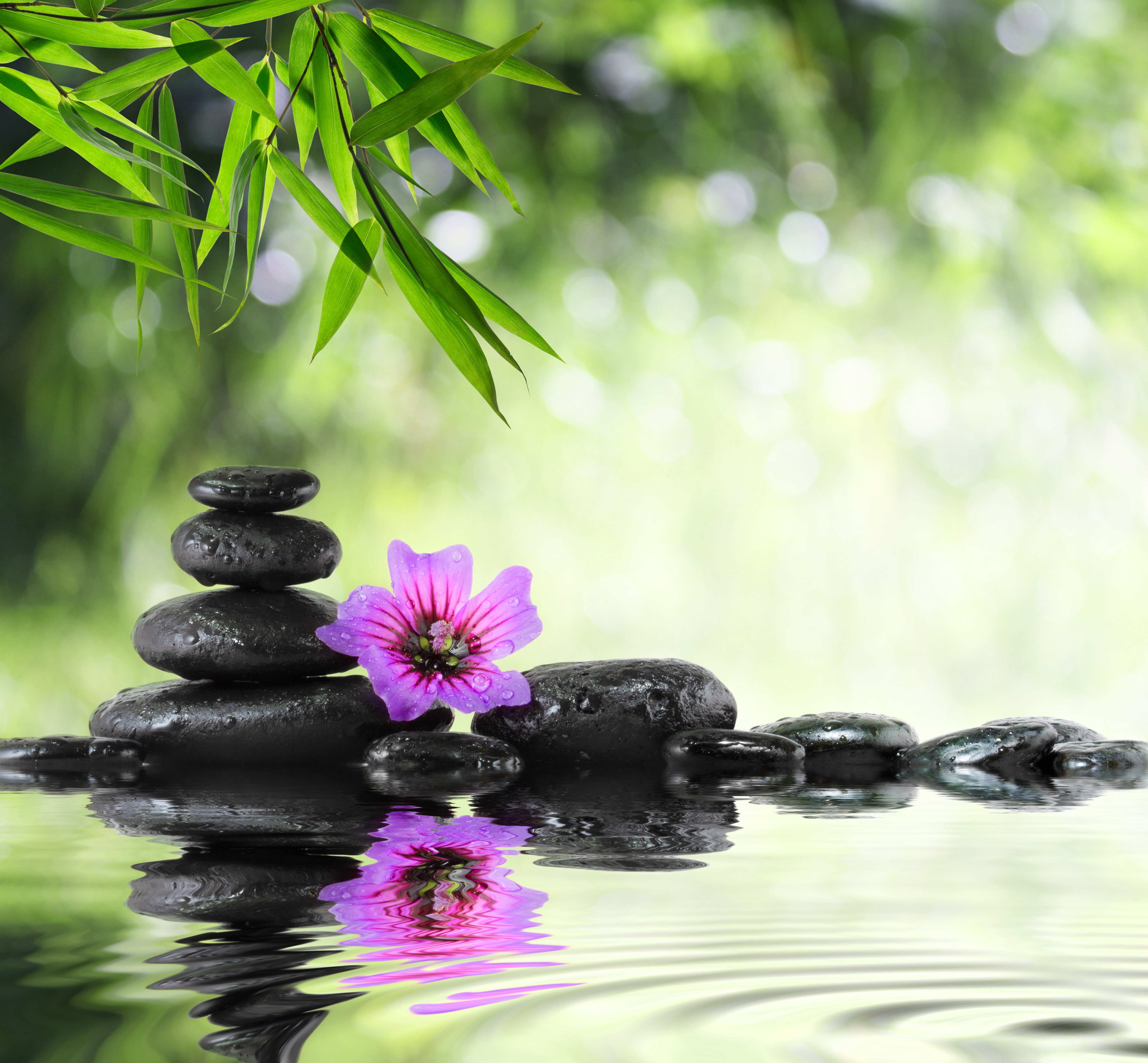 Gallery Backgrounds Green Spa Background