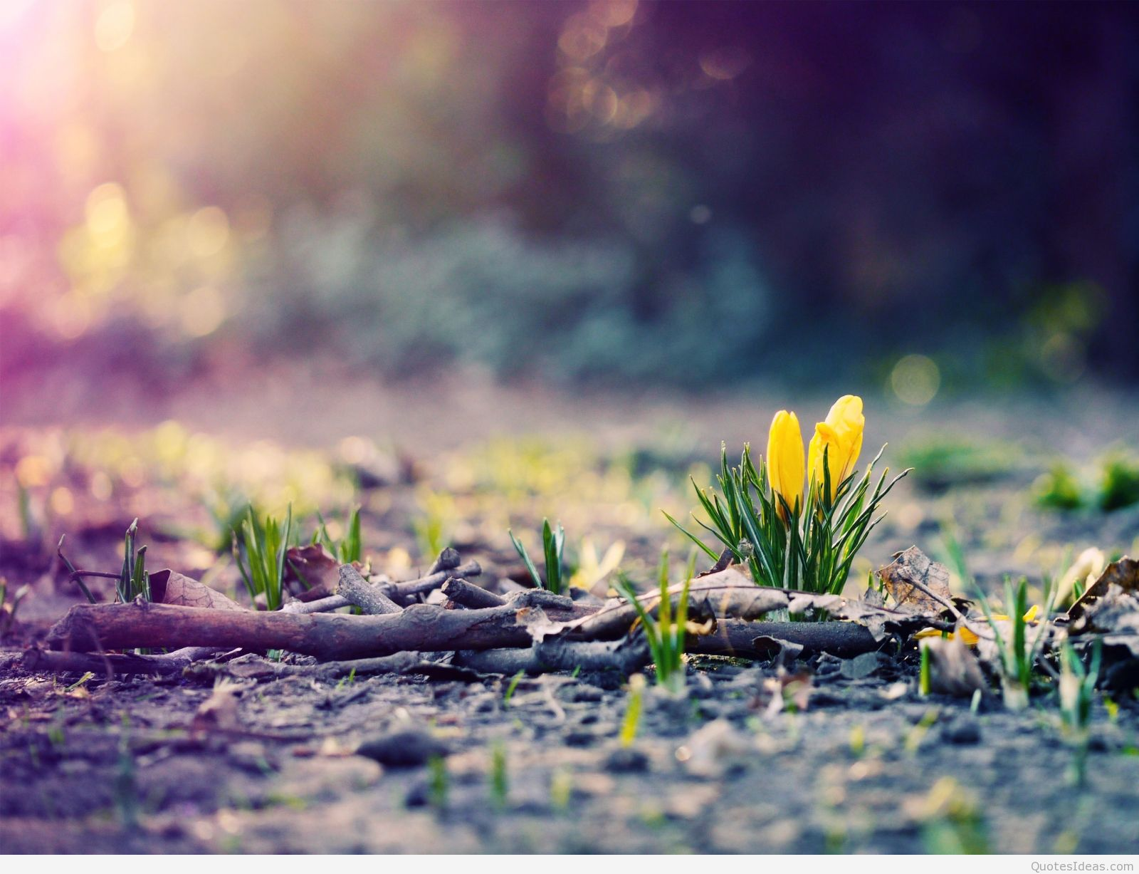 tag archives wallpaper march spring march april spring wallpapers 2016