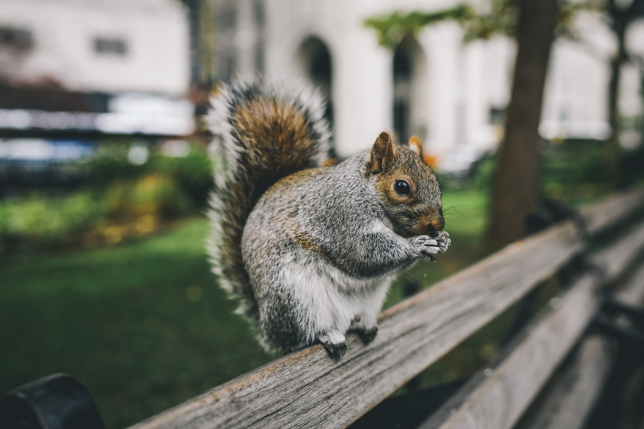 nature, Squirrel Wallpapers HD / Desktop and Mobile Backgrounds