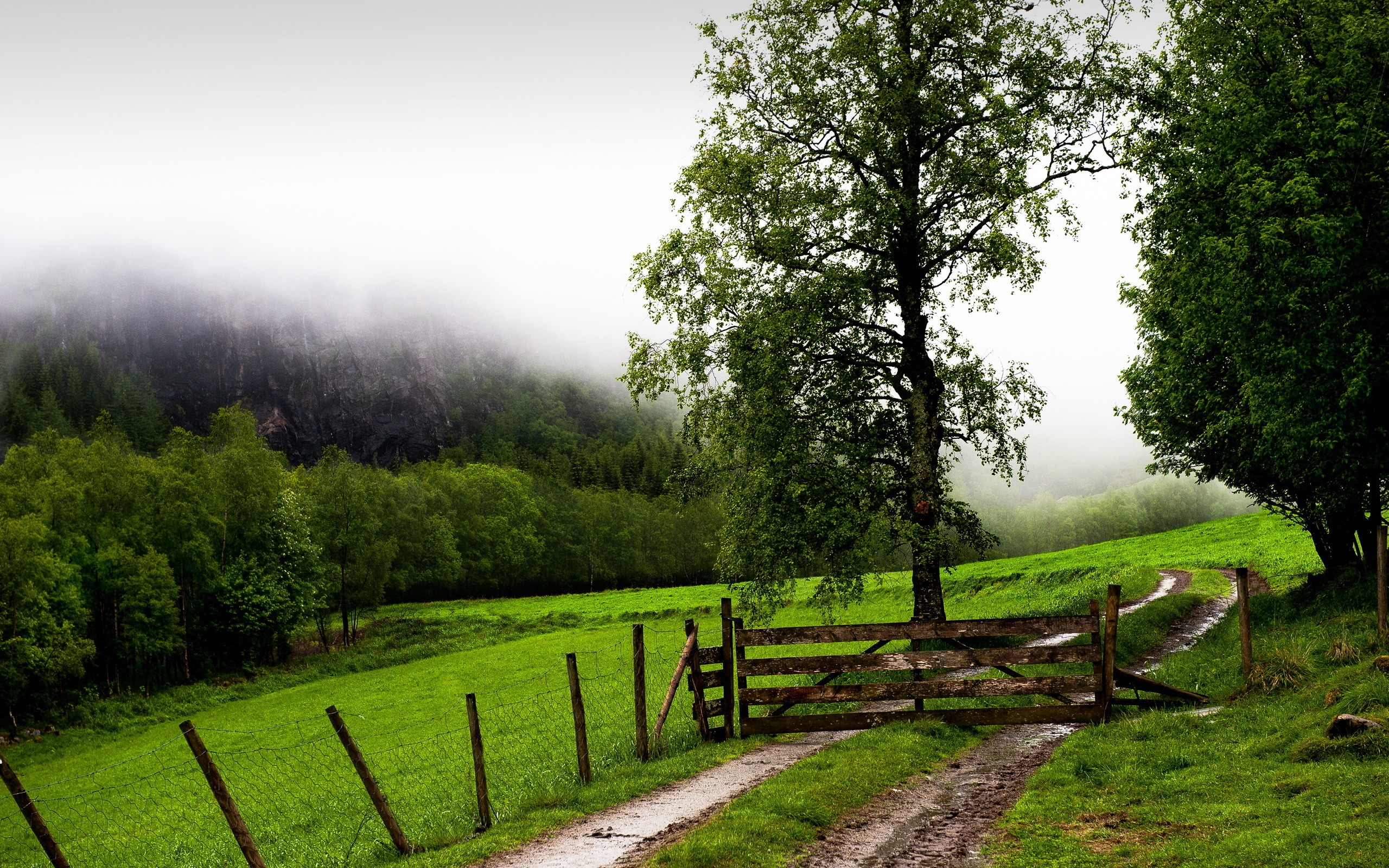 Daily Wallpaper: Foggy Ranch | I Like To Waste My Time