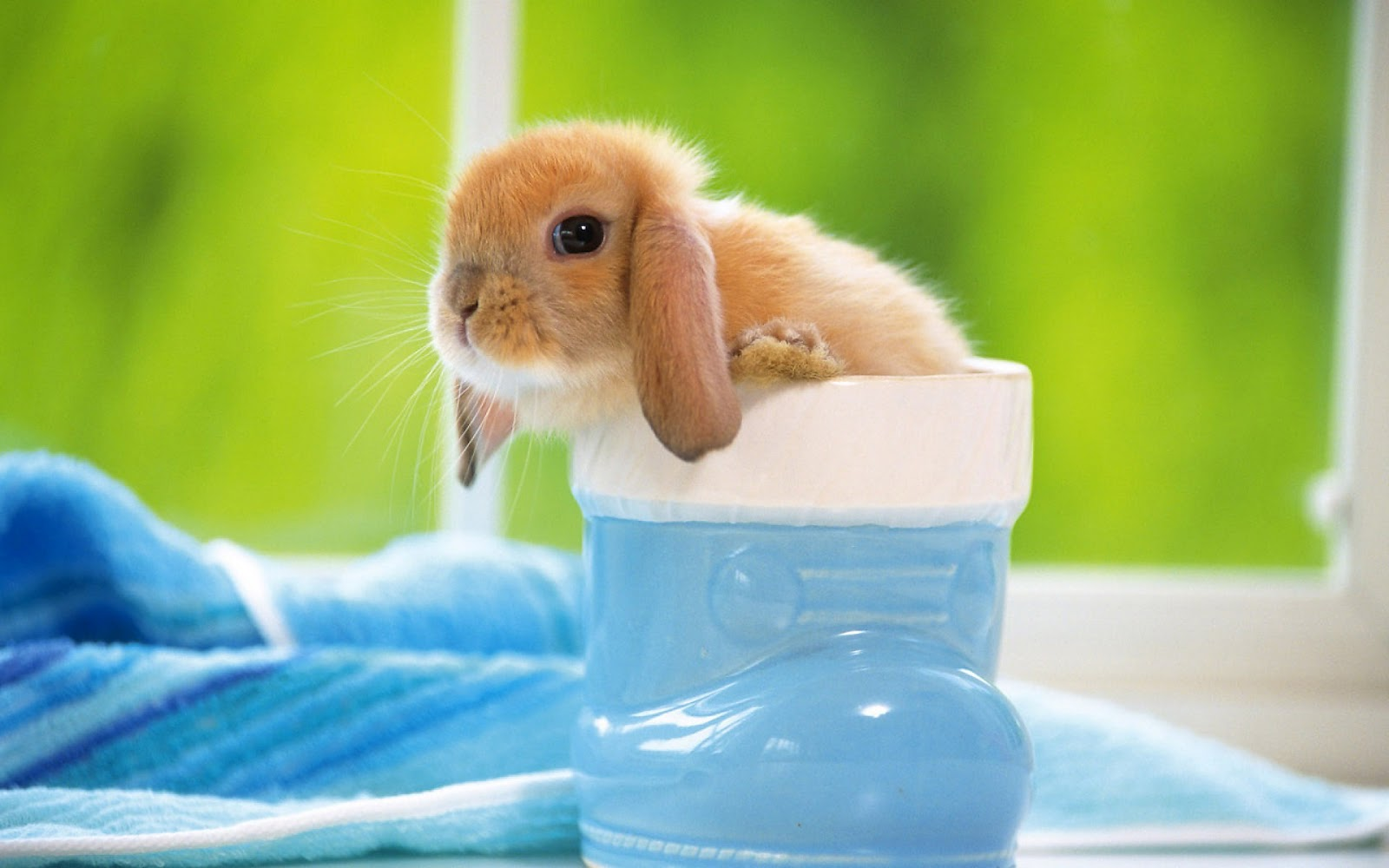 Bunny wallpapers cute rabbit wallpapers cute rabbits hd 1080p cute ...
