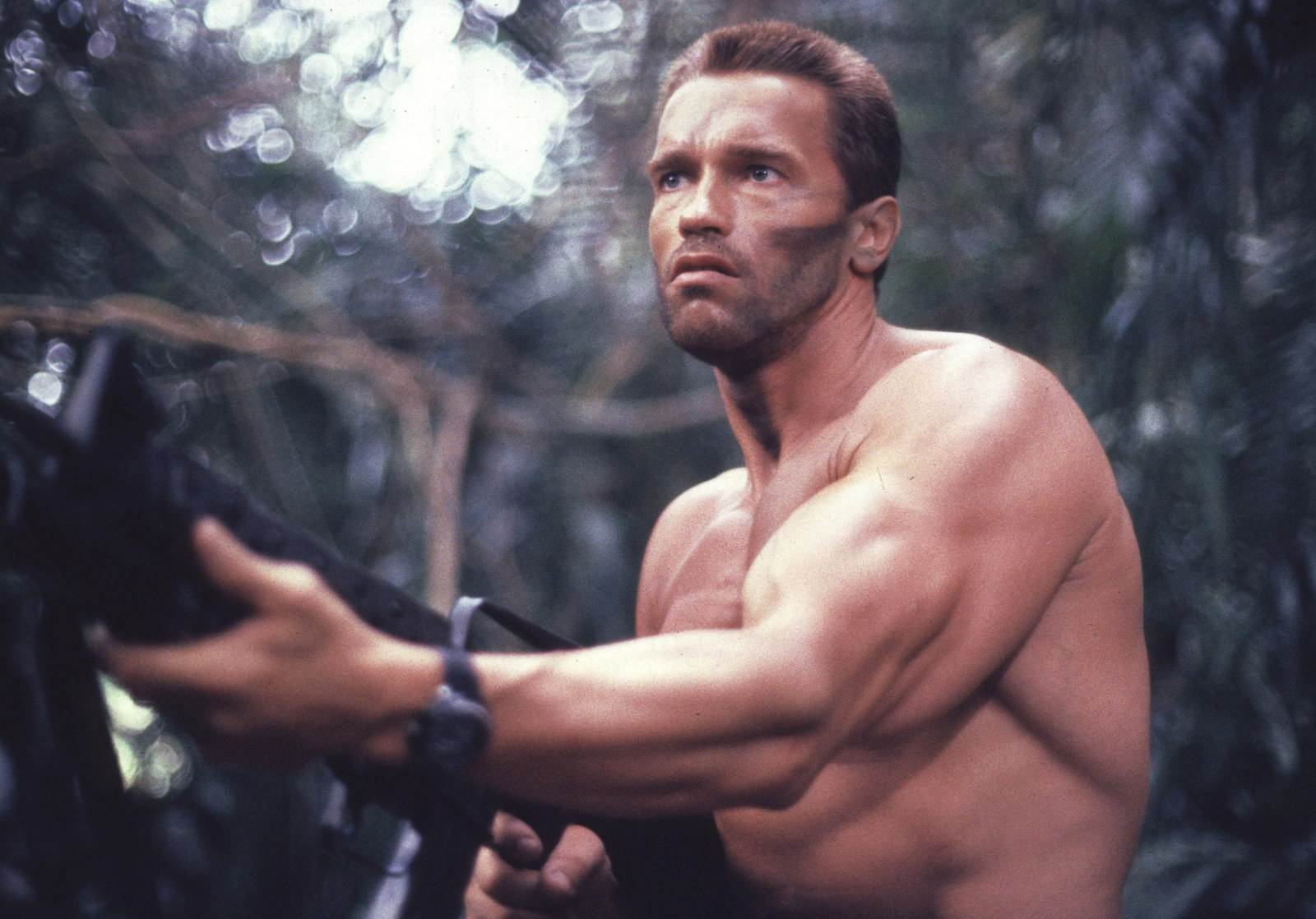 Arnold Schwarzenegger - Hollywood - Actors Wallpapers Download FREE ...