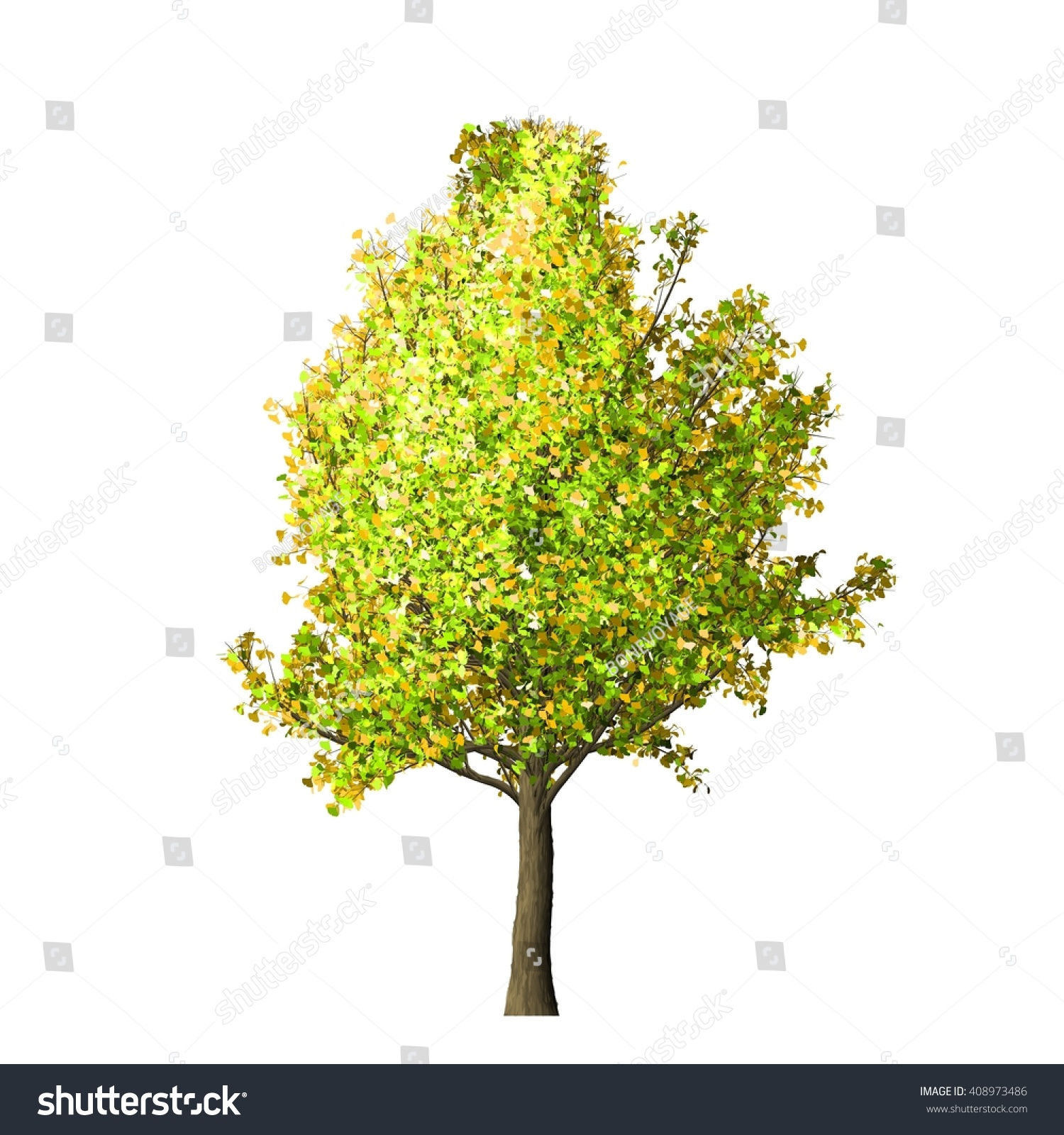 Ginkgo Tree Isolated On White Background, 3d Illustration. - 408973486 ...
