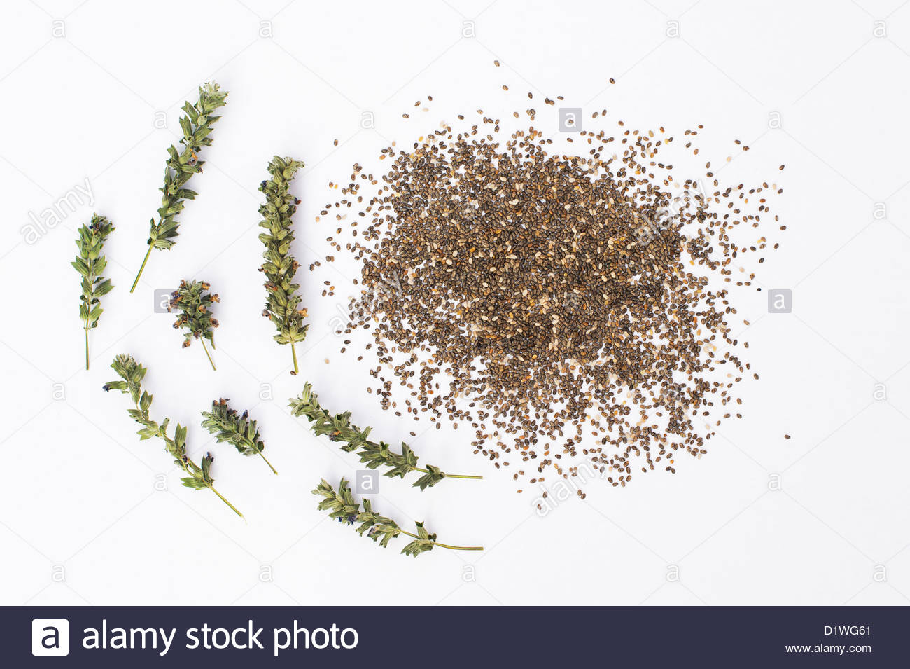 Salvia Hispanica flower seed pods and Chia seeds on white background ...