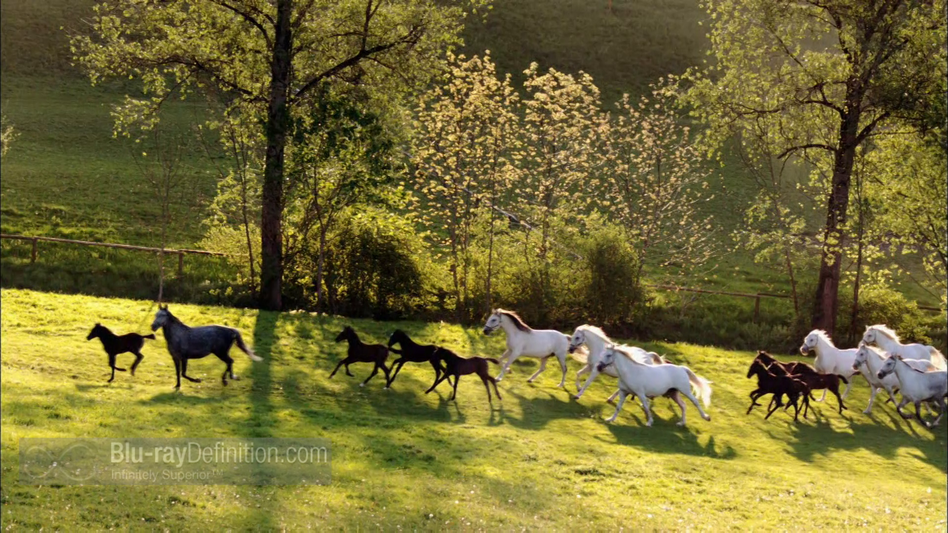 Purchase Nature: Legendary White Stallions on Blu-ray at CD Universe