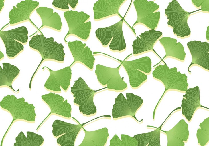 1400x980 Ginko Leaf Vectors - Download Free Vector Art, Stock Graphics & Images