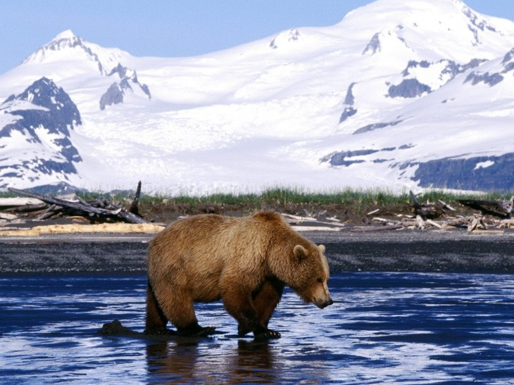 1600x1200 Bears! images Bear Wallpaper HD wallpaper and background photos ...