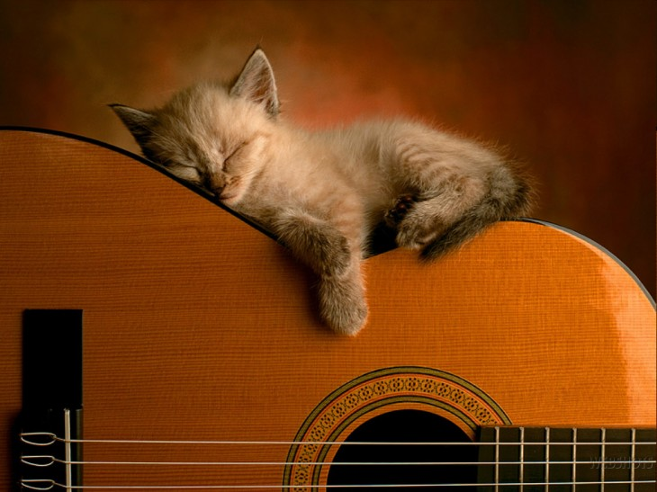 1024x768 sleeping - Cats Wallpaper (247222) - Fanpop