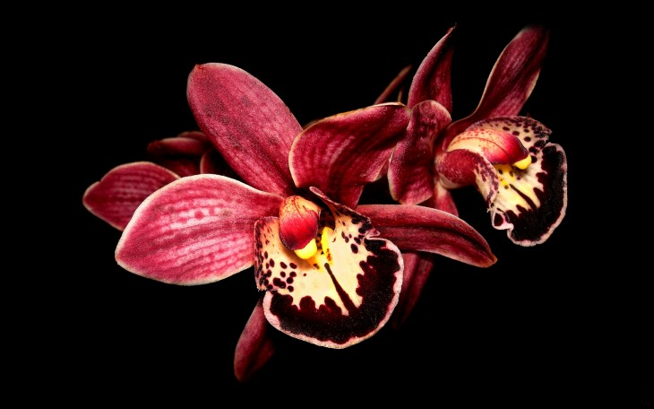 1920x1200 21 Gorgeous HD Orchid Flowers Wallpapers - HDWallSource.com