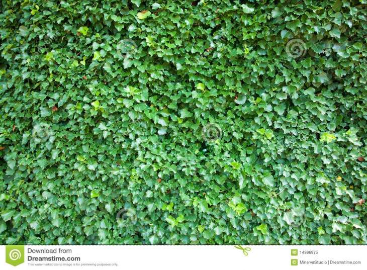 1300x957 Ivy Background High Resolution Royalty Free Stock Photo - Image ...