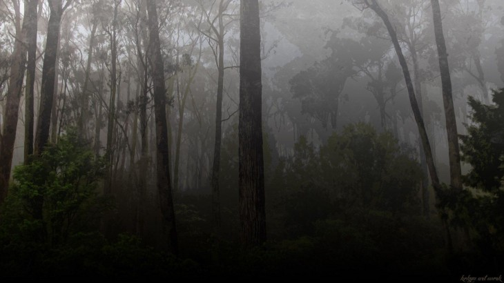 1920x1080 Dark Forest Backgrounds - Wallpaper Cave